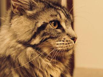 猫屿咖啡·甜品·猫咖·剧本