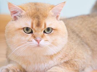 猫堂社·地下吸猫场所·猫咖