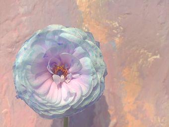 一枝花艺术培训