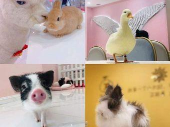 爱你鸭萌宠俱乐部·羊驼·柯尔鸭·小猪·兔兔