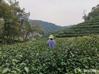 梅坞茶缘采茶体验馆