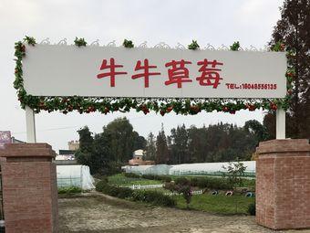牛牛草莓采摘园(香城大道店)