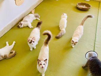 喵町Meow剧本杀撸猫探案馆