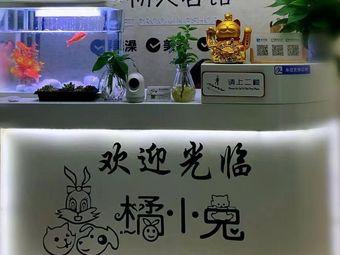 橘小兔宠物馆