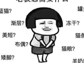 派多格宠物(启阳路店)