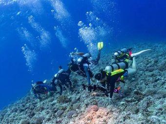 双月湾鲸鲨潜水俱乐部
