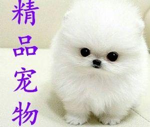 中南犬舍猫舍•高端精品健康宠物专卖