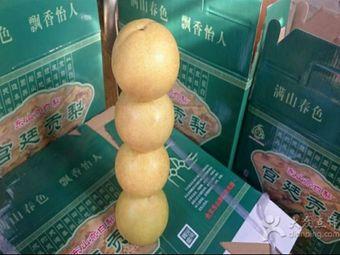 红姐果园京白梨采摘