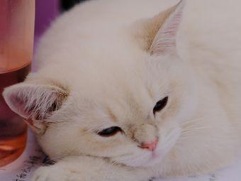 灵猫塔罗·猫咖