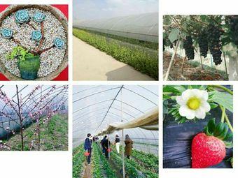 太平生态农场采摘园