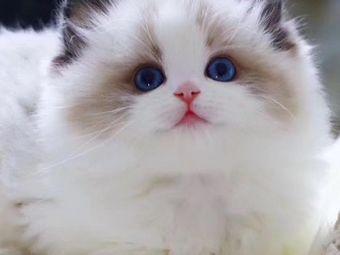 MiuMiu猫吧猫咖·桌游