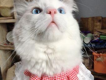 瘾猫猫咖手创体验馆
