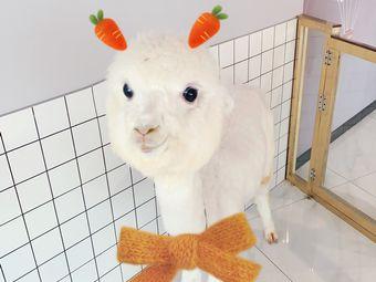 薄荷糖羊驼萌宠体验馆