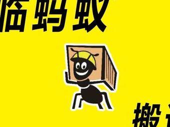 临蚂蚁·搬运公司(南坊店)