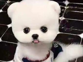 『心宠』幼犬猫咪出售(安徽区总部)