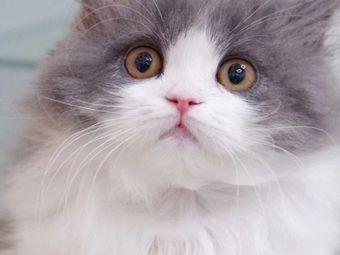 喵喵家的猫宠物生活馆