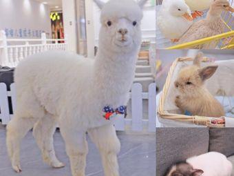 Make·喜樂門·羊驼·柯尔鸭·小香猪·撸兔