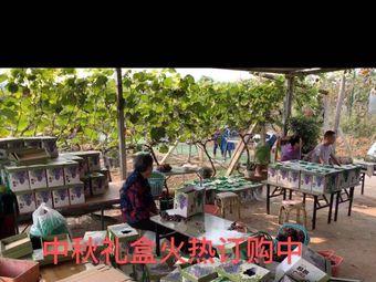 初心农家·品质葡萄·生态采摘园