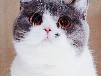 神奇的猫小咖·猫舍(太仓店)