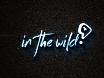 In the wild剧本推理社
