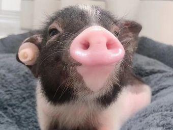 小猪快跑·撸猪馆