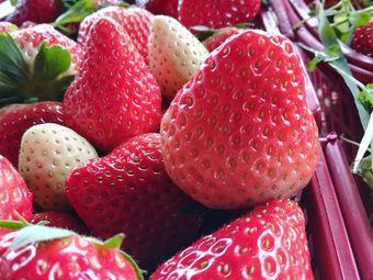 鲜多多草莓园