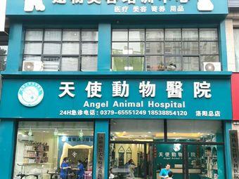天使动物医院(洛阳总店)