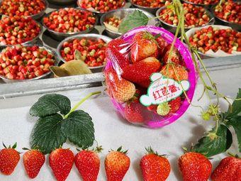金来有草莓采摘园