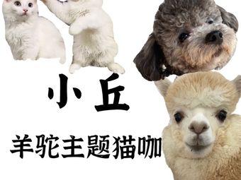 小丘羊驼·猫咖·宠物美容