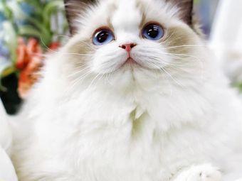 宁波宠物猫舍基地(天一店)