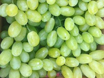 官厅乡悦庄园 葡萄