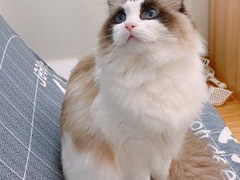 楼上喵·猫咖