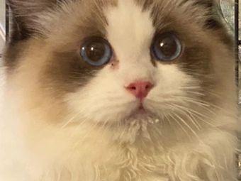 猫撸撸布偶体验馆·洛丽塔换装· 神兽羊驼(大悦城店)