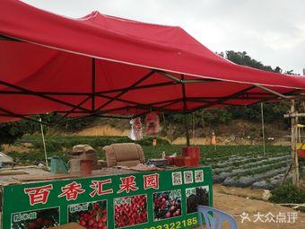 塘朗百香汇果园