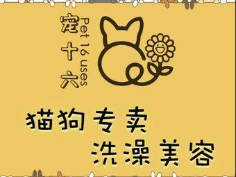 丸子猫舍犬舍·宠物猫狗专卖店