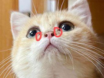 汤姆家的猫