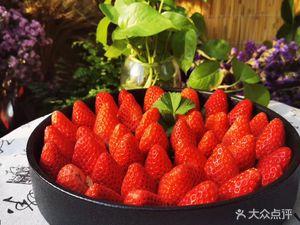 遇见莓好有机草莓采摘园