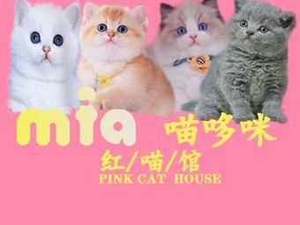 喵哆咪CFA国际赛级·猫舍宠物店(花果园店)
