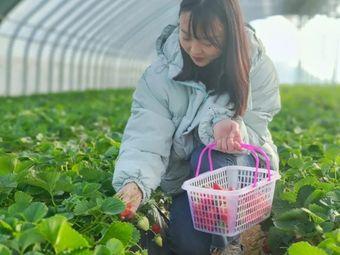 西禾高品质草莓采摘园河阴园区