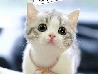 寵佳貓文化體驗店 名貓專售及用品批發