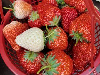 张胖草莓采摘园