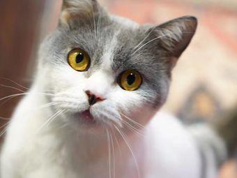 古德猫咖·撸猫馆
