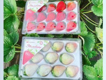 桃園農莊·草莓采摘基地