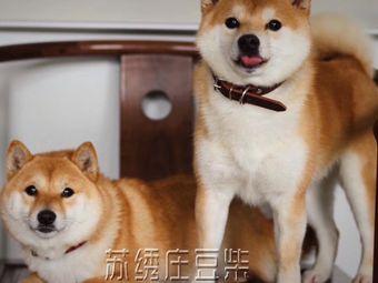 苏绣庄豆柴柴犬专门店