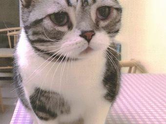 猫不理猫咖·萌宠馆