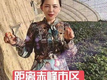 杨家湾草莓采摘园
