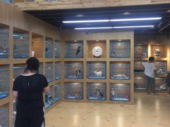 青橙莊園貓狗萌寵專售旗艦店