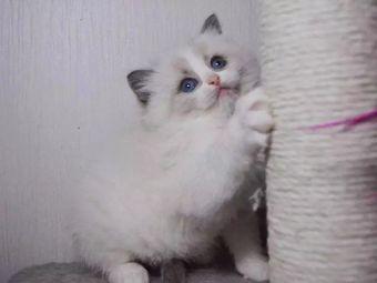 合肥菲比宠物猫舍(步行街店)