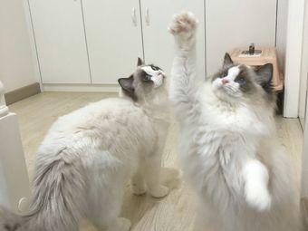 十只猫咖社交馆