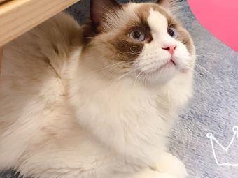 吾喵宠物·猫咖